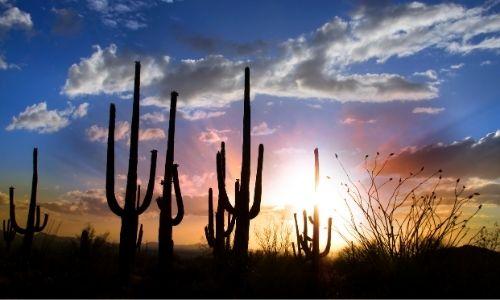 Gold Canyon desert